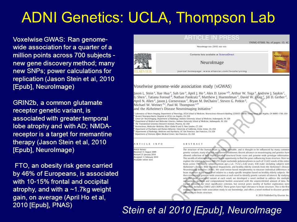 ADNI Genetics: UCLA, Thompson Lab Stein et al 2010 [Epub], NeuroImage Voxelwise GWAS: Ran genome- wide association for a quarter of a million points across 700 subjects - new gene discovery method; many new SNPs; power calculations for replication (Jason Stein et al, 2010 [Epub], NeuroImage) GRIN2b, a common glutamate receptor genetic variant, is associated with greater temporal lobe atrophy and with AD; NMDA- receptor is a target for memantine therapy (Jason Stein et al, 2010 [Epub], NeuroImage) FTO, an obesity risk gene carried by 46% of Europeans, is associated with 10-15% frontal and occipital atrophy, and with a ~1.7kg weight gain, on average (April Ho et al, 2010 [Epub], PNAS)
