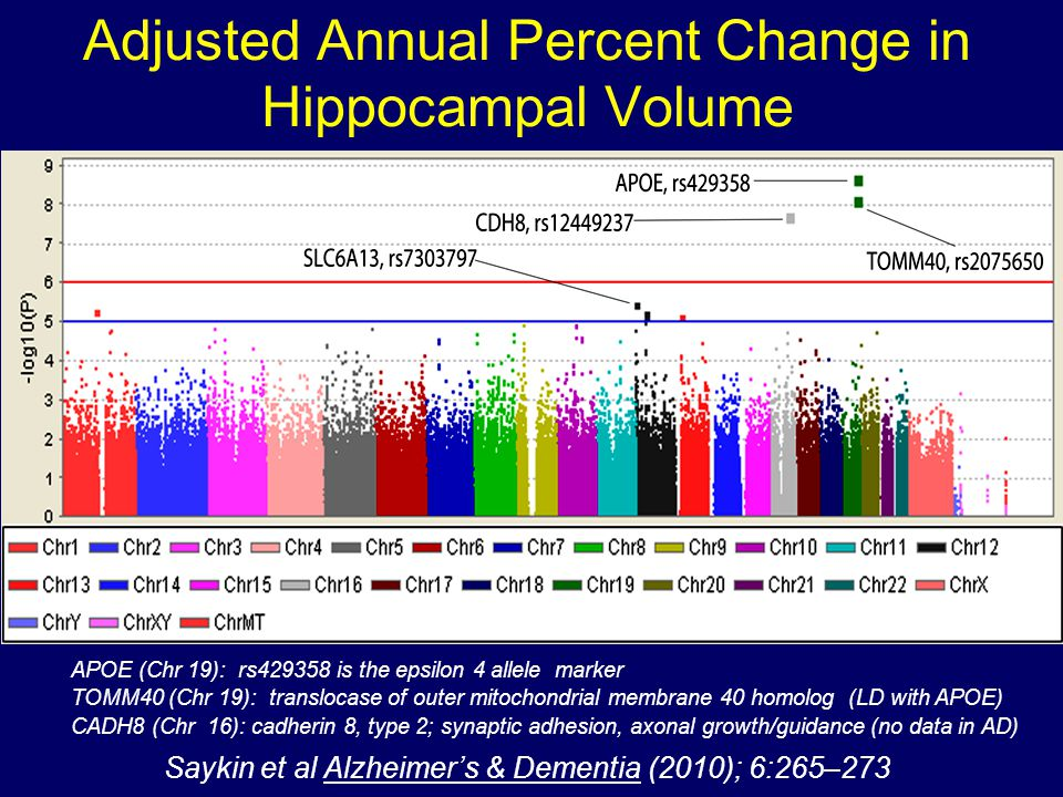 Adjusted Annual Percent Change in Hippocampal Volume APOE (Chr 19): rs429358 is the epsilon 4 allele marker TOMM40 (Chr 19): translocase of outer mitochondrial membrane 40 homolog (LD with APOE) CADH8 (Chr 16): cadherin 8, type 2; synaptic adhesion, axonal growth/guidance (no data in AD) Saykin et al Alzheimers & Dementia (2010); 6:265–273