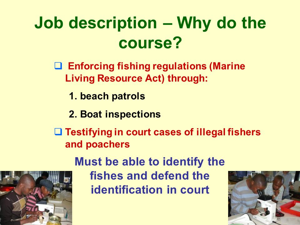 Course objectives Learning the different parts (morphology) of the body of the fish Learning to take counts and measurements from a fish specimens and how they are used