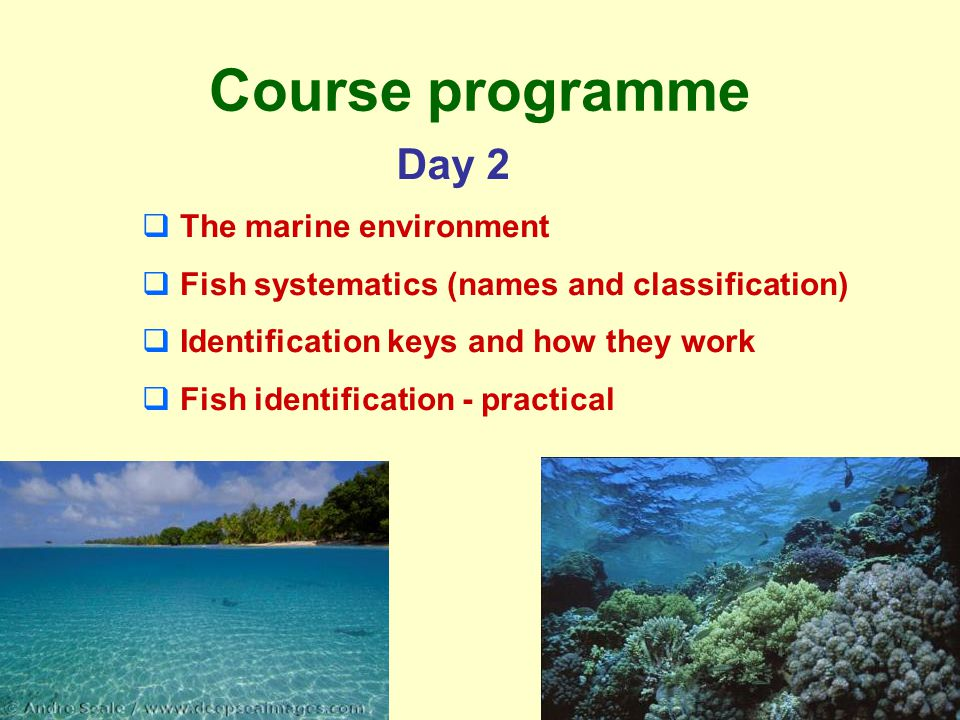 Course programme The marine environment Fish systematics (names and classification) Identification keys and how they work Fish identification - practical Day 2