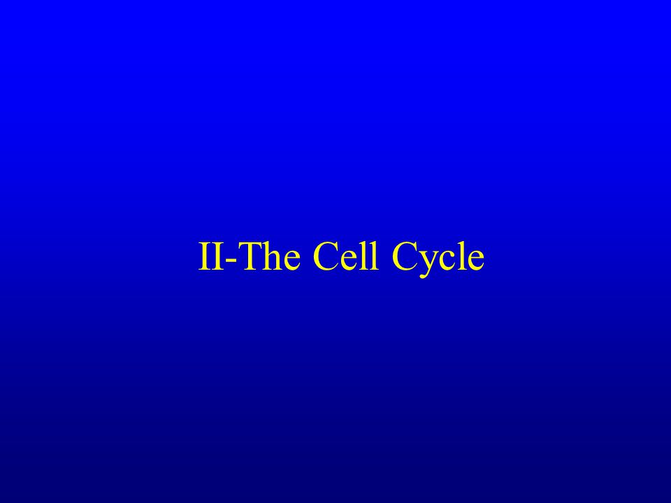 II-The Cell Cycle