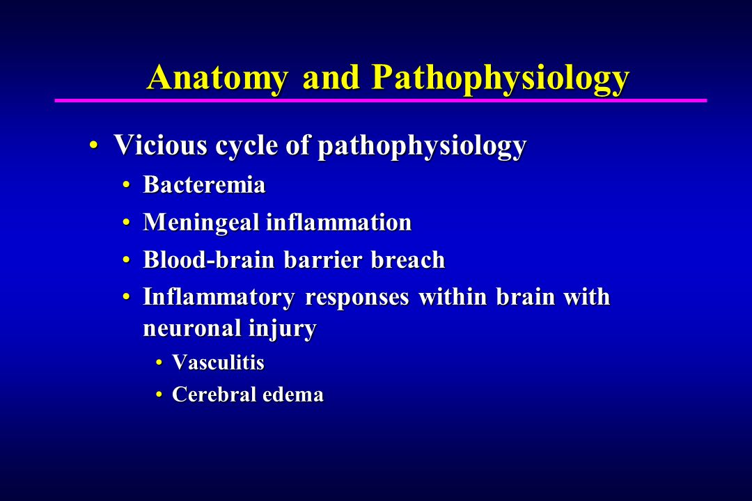 Anatomy and Pathophysiology Vicious cycle of pathophysiologyVicious cycle of pathophysiology BacteremiaBacteremia Meningeal inflammationMeningeal inflammation Blood-brain barrier breachBlood-brain barrier breach Inflammatory responses within brain with neuronal injuryInflammatory responses within brain with neuronal injury VasculitisVasculitis Cerebral edemaCerebral edema