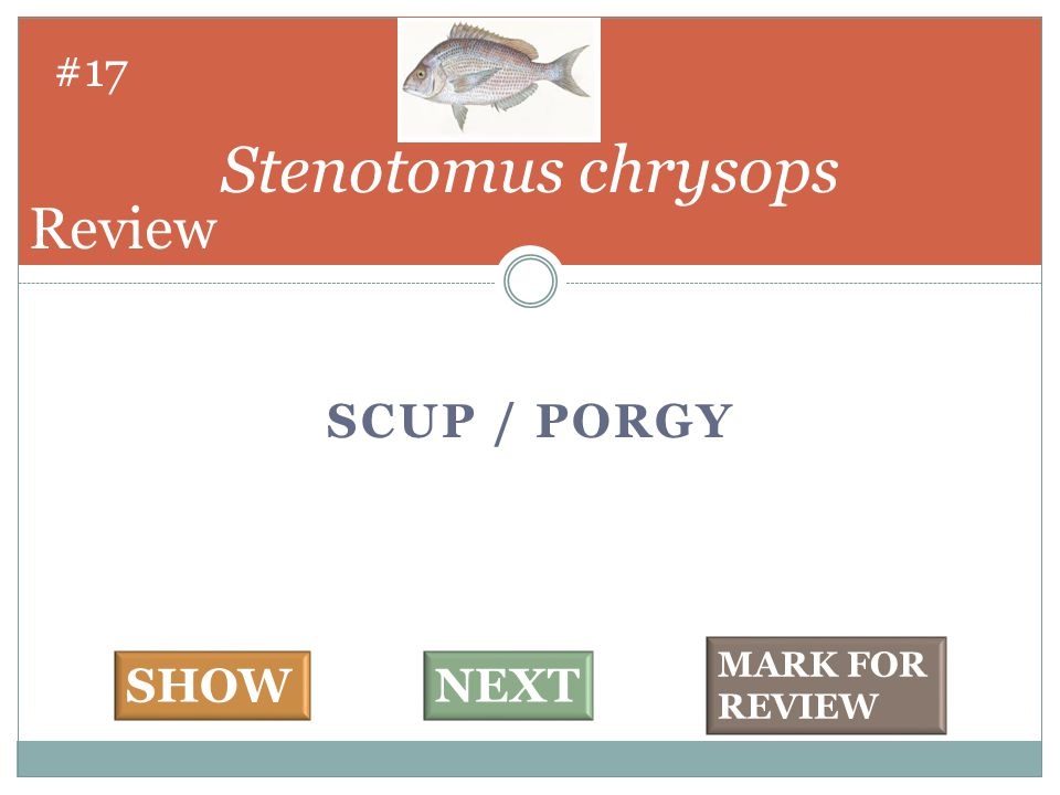 SCUP / PORGY Stenotomus chrysops #17 SHOWNEXT MARK FOR REVIEW Review