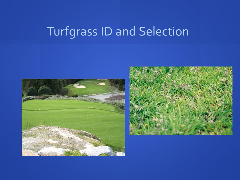 Turfgrass ID and Selection