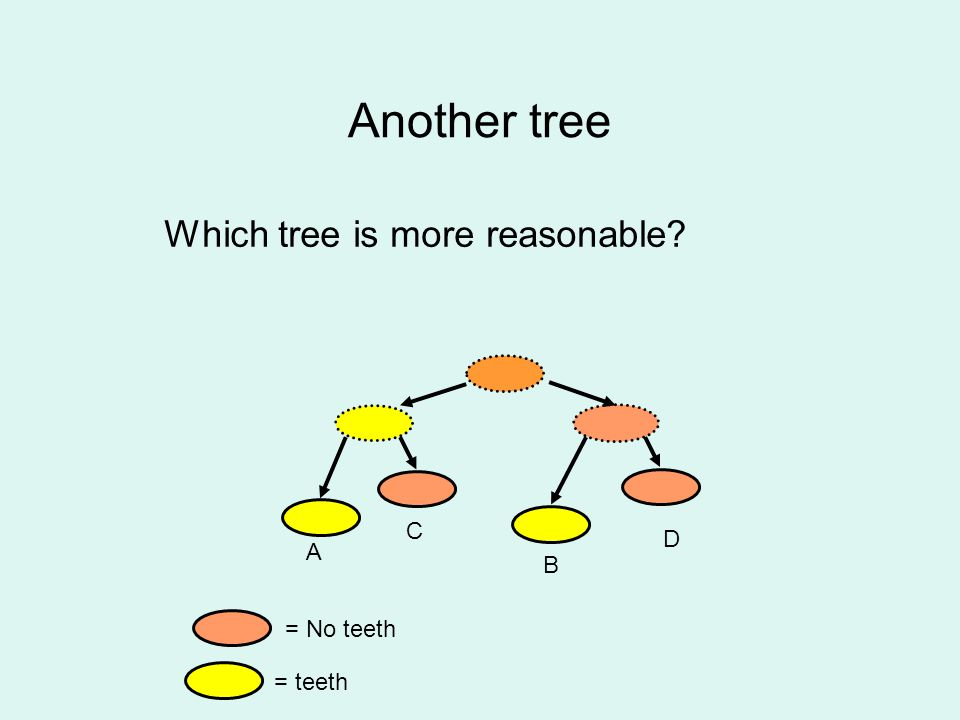 Another tree Which tree is more reasonable? = No teeth = teeth A B C D
