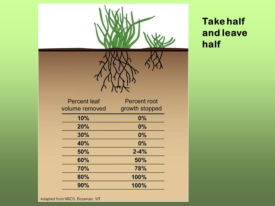 Adapted from NRCS, Bozeman, MT Take half and leave half