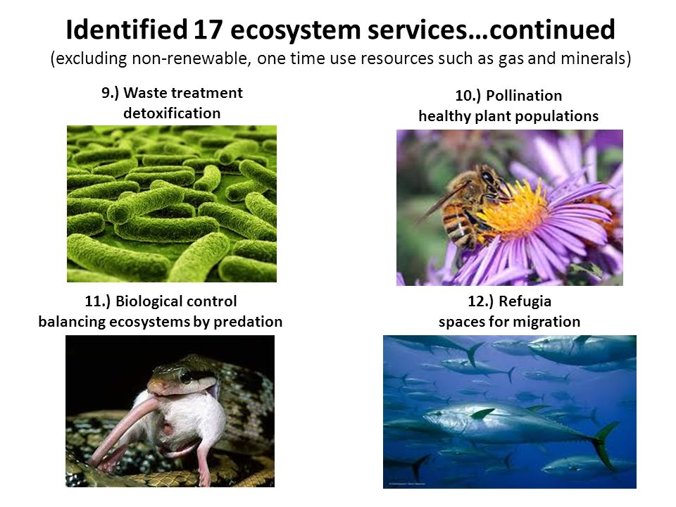 Identified 17 ecosystem services…continued (excluding non-renewable, one time use resources such as gas and minerals) 9.) Waste treatment detoxificati