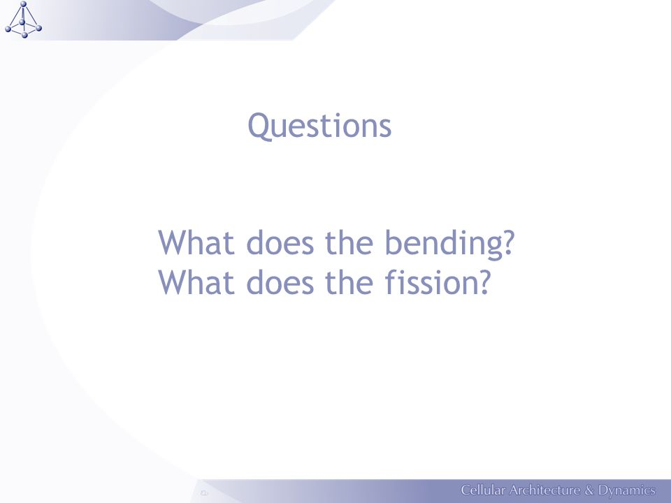 Questions What does the bending? What does the fission?