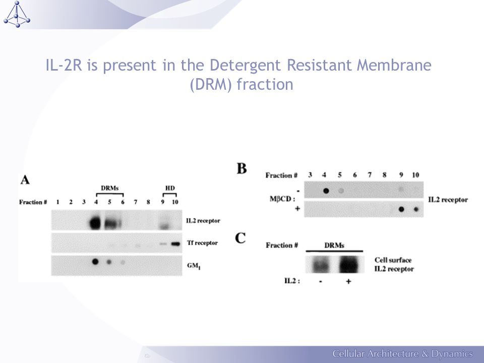 IL-2R is present in the Detergent Resistant Membrane (DRM) fraction