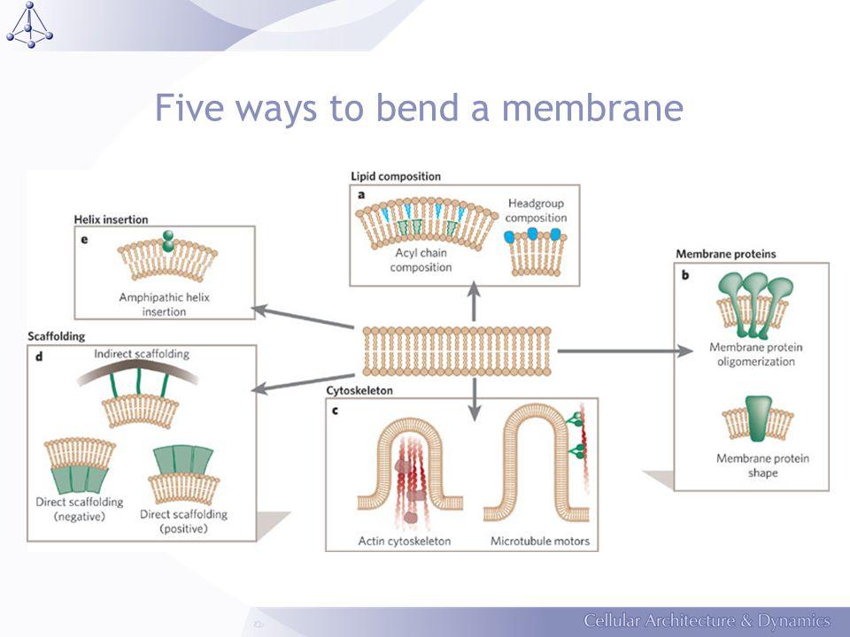 Epsin induces bending of liposomes