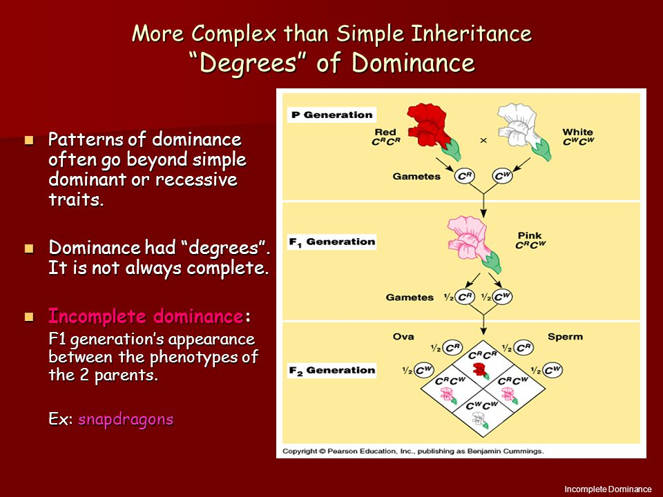 More Complex than Simple Inheritance Degrees of Dominance Patterns of dominance often go beyond simple dominant or recessive traits.
