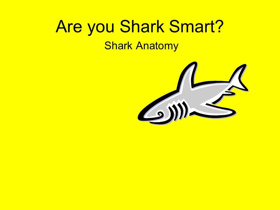 Are you Shark Smart? Shark Anatomy