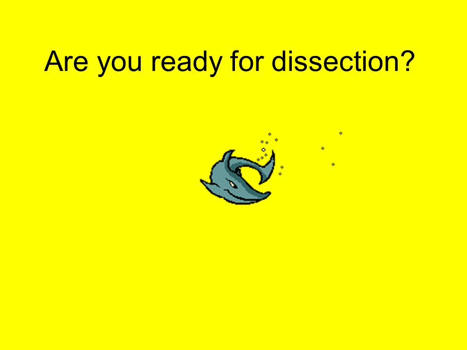 Are you ready for dissection?