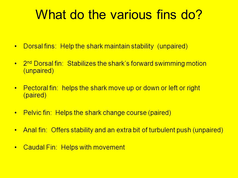 What do the various fins do.