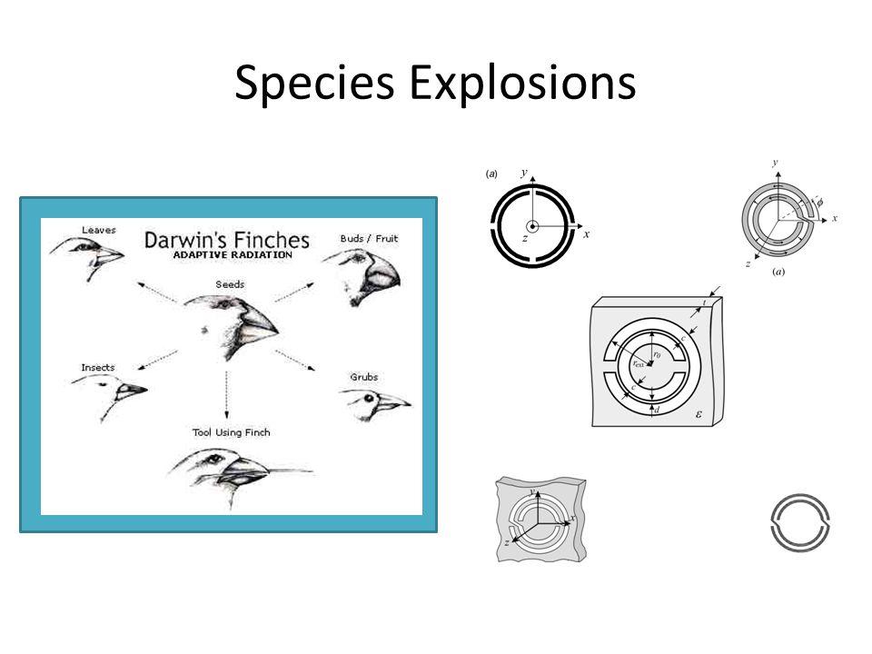 Species Explosions