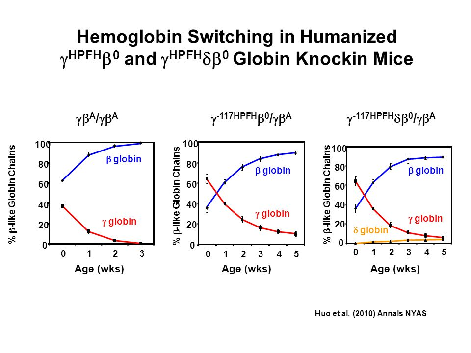 Hemoglobin Switching in Humanized HPFH 0 and HPFH 0 Globin Knockin Mice 0123 0 20 40 60 80 100 % -like Globin Chains Age (wks) globin A / A % -like Gl