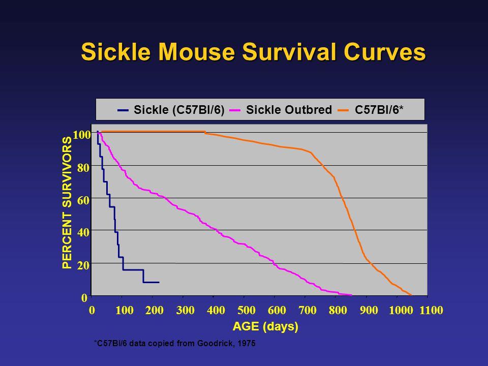 Sickle Mouse Survival Curves 0 20 40 60 80 100 0 20030040050060070080090010001100 AGE (days) Sickle (C57Bl/6)Sickle OutbredC57Bl/6* PERCENT SURVIVORS