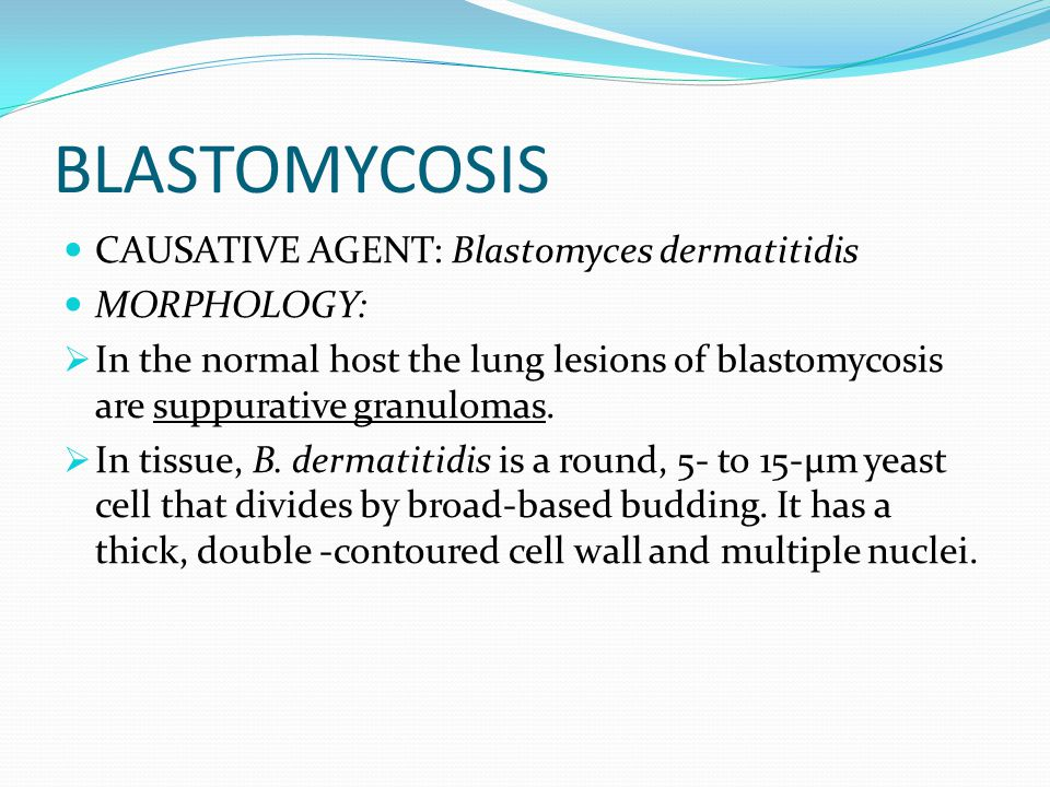 BLASTOMYCOSIS CAUSATIVE AGENT: Blastomyces dermatitidis MORPHOLOGY: In the normal host the lung lesions of blastomycosis are suppurative granulomas. I