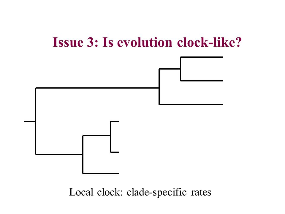 Local clock: clade-specific rates