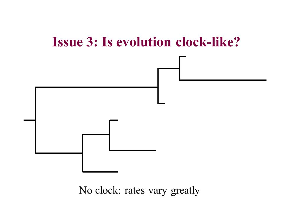 Issue 3: Is evolution clock-like No clock: rates vary greatly
