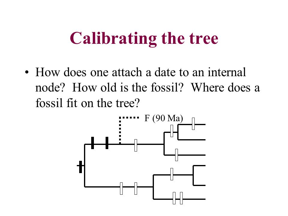 Calibrating the tree How does one attach a date to an internal node.