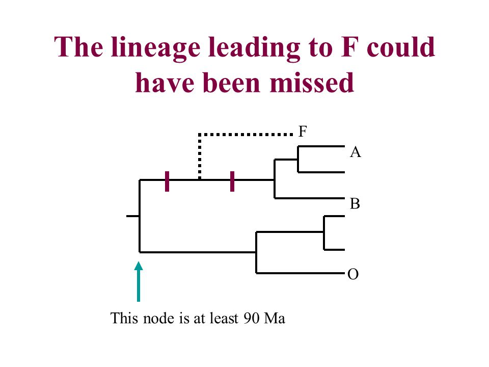 The lineage leading to F could have been missed O B A F This node is at least 90 Ma
