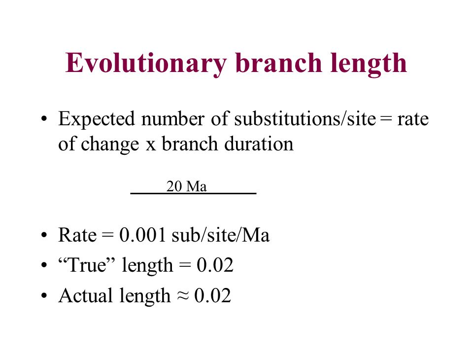 Evolutionary branch length Expected number of substitutions/site = rate of change x branch duration Rate = 0.001 sub/site/Ma True length = 0.02 Actual length 0.02 20 Ma