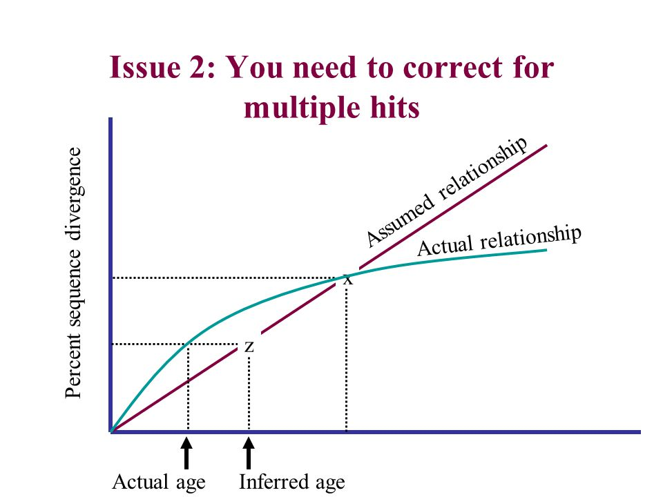 Issue 2: You need to correct for multiple hits Percent sequence divergence x z Assumed relationship Actual relationship Inferred age Actual age