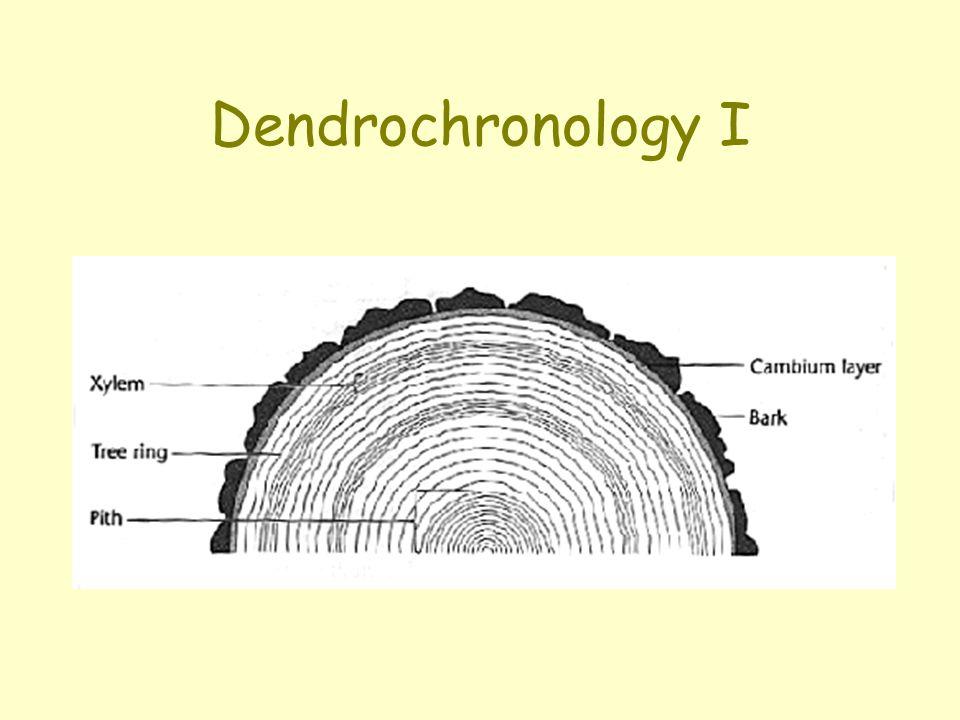 Dendrochronology I