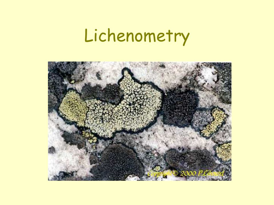 Lichenometry
