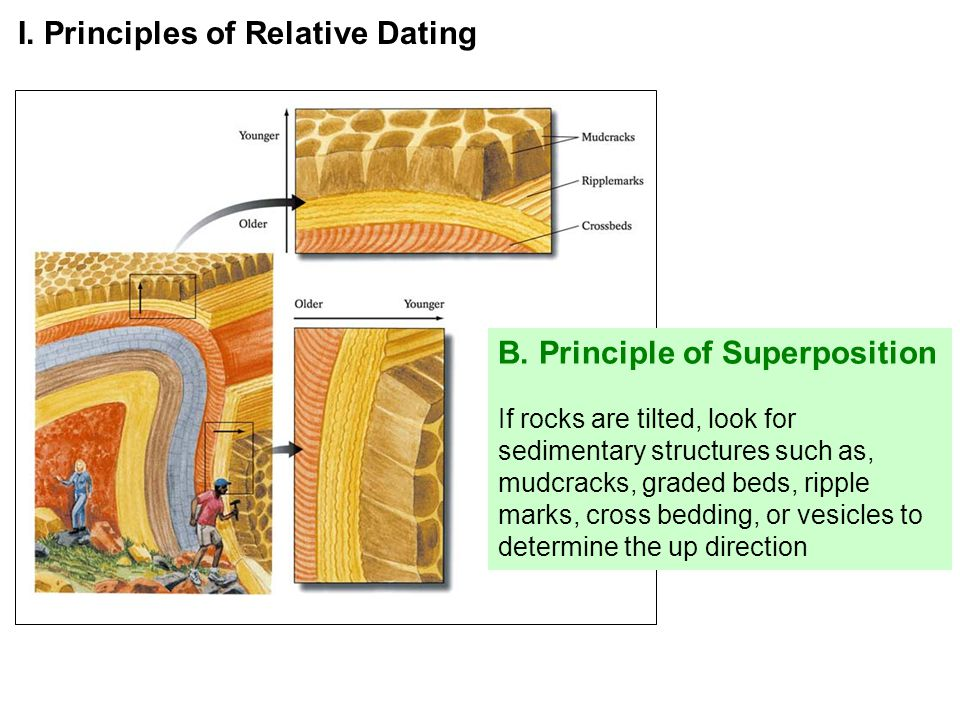 B. Principle of Superposition If rocks are tilted, look for sedimentary structures such as, mudcracks, graded beds, ripple marks, cross bedding, or ve
