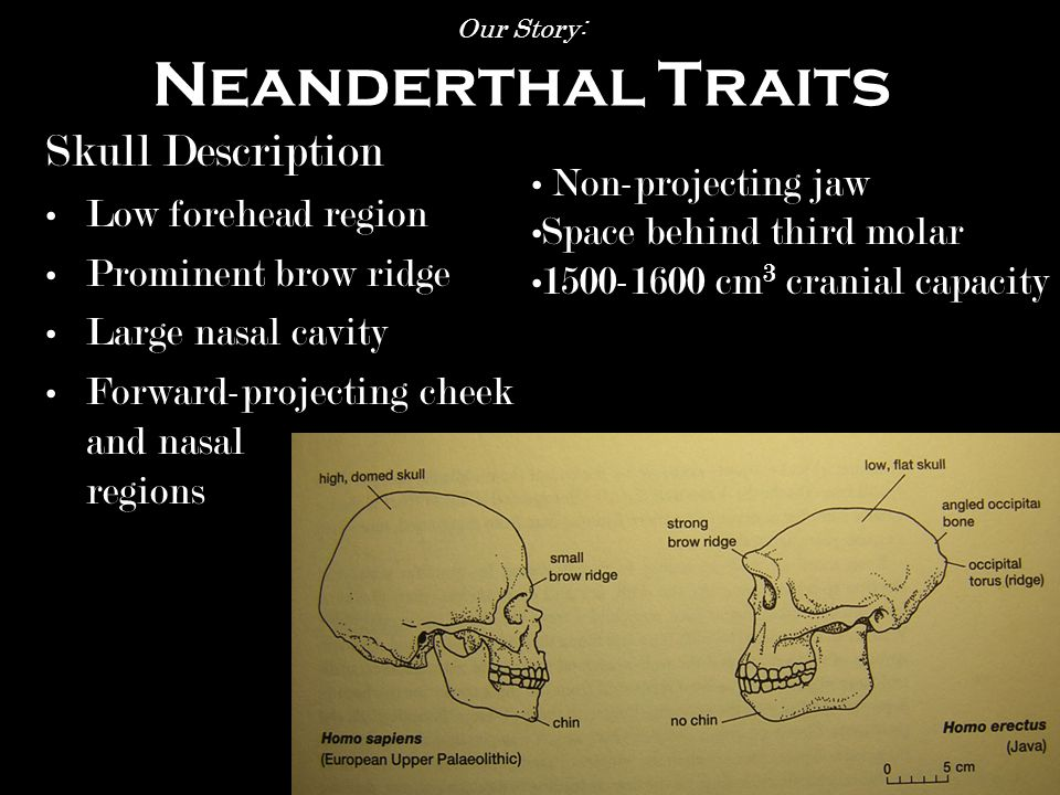 Our Story: Who is Neanderthal.