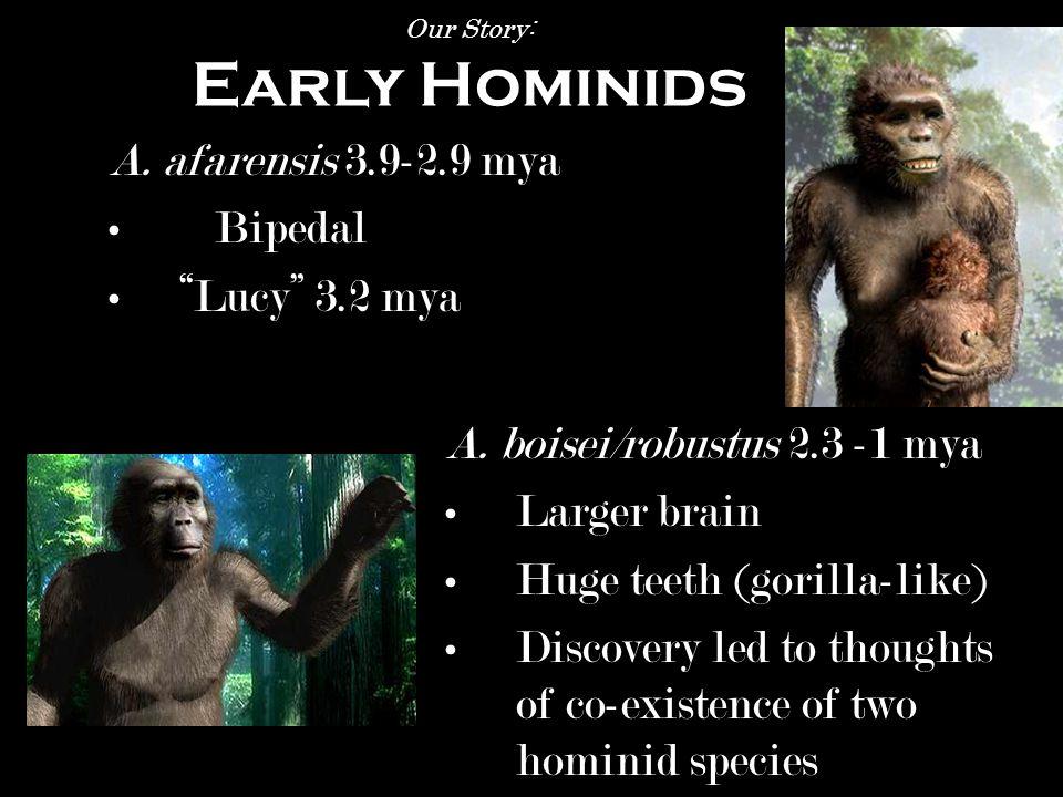australopithecus Homo erectus Homo habilis