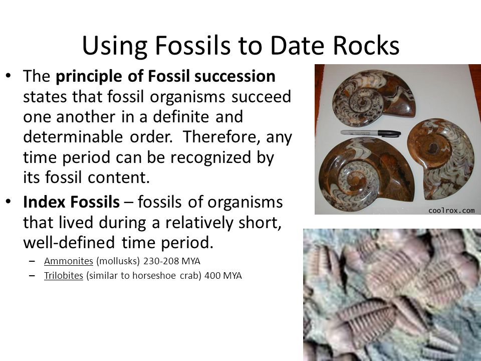 Using Fossils to Date Rocks The principle of Fossil succession states that fossil organisms succeed one another in a definite and determinable order.