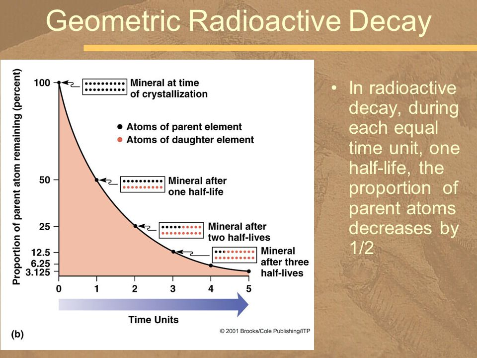 In radioactive decay, during each equal time unit, one half-life, the proportion of parent atoms decreases by 1/2 Geometric Radioactive Decay