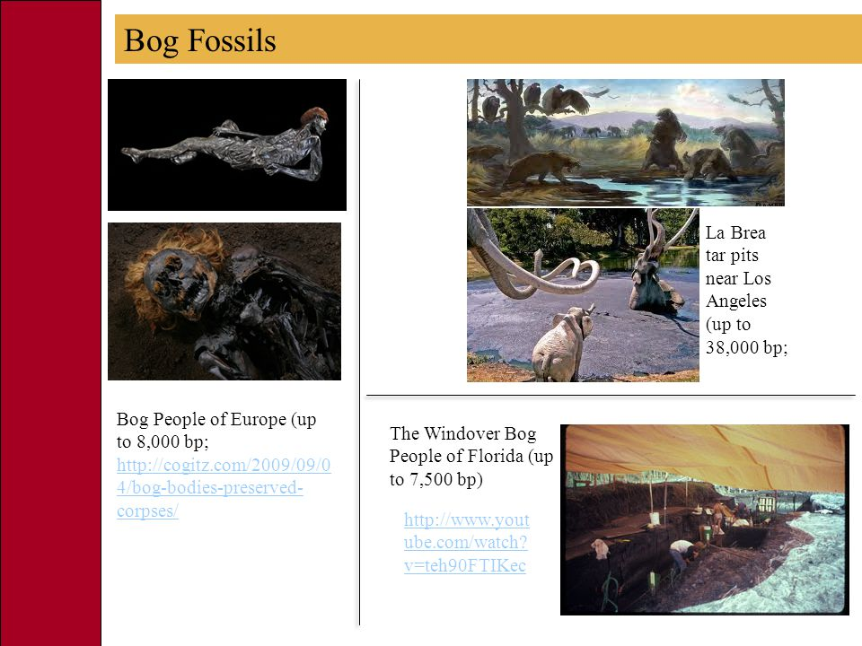 Bog People of Europe (up to 8,000 bp; http://cogitz.com/2009/09/0 4/bog-bodies-preserved- corpses/ http://cogitz.com/2009/09/0 4/bog-bodies-preserved- corpses/ La Brea tar pits near Los Angeles (up to 38,000 bp; http://www.yout ube.com/watch.