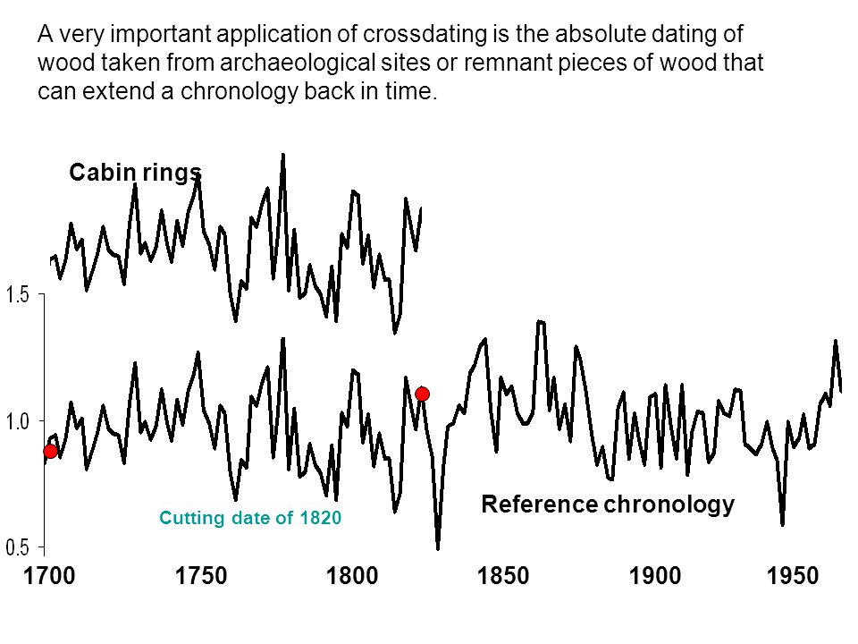 1700 1750 1800 1850 1900 1950 Reference chronology Cabin rings Cutting date of 1820 A very important application of crossdating is the absolute dating of wood taken from archaeological sites or remnant pieces of wood that can extend a chronology back in time.