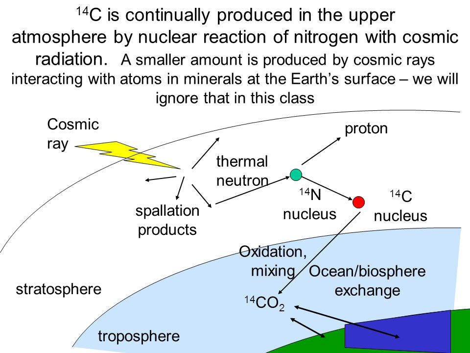14 C is continually produced in the upper atmosphere by nuclear reaction of nitrogen with cosmic radiation.