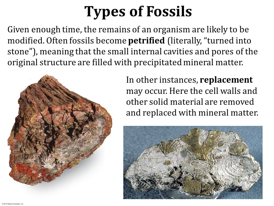 There are many types of fossils. The remains of relatively recent organisms many not have been altered at all. Such objects as teeth, bones, and shell