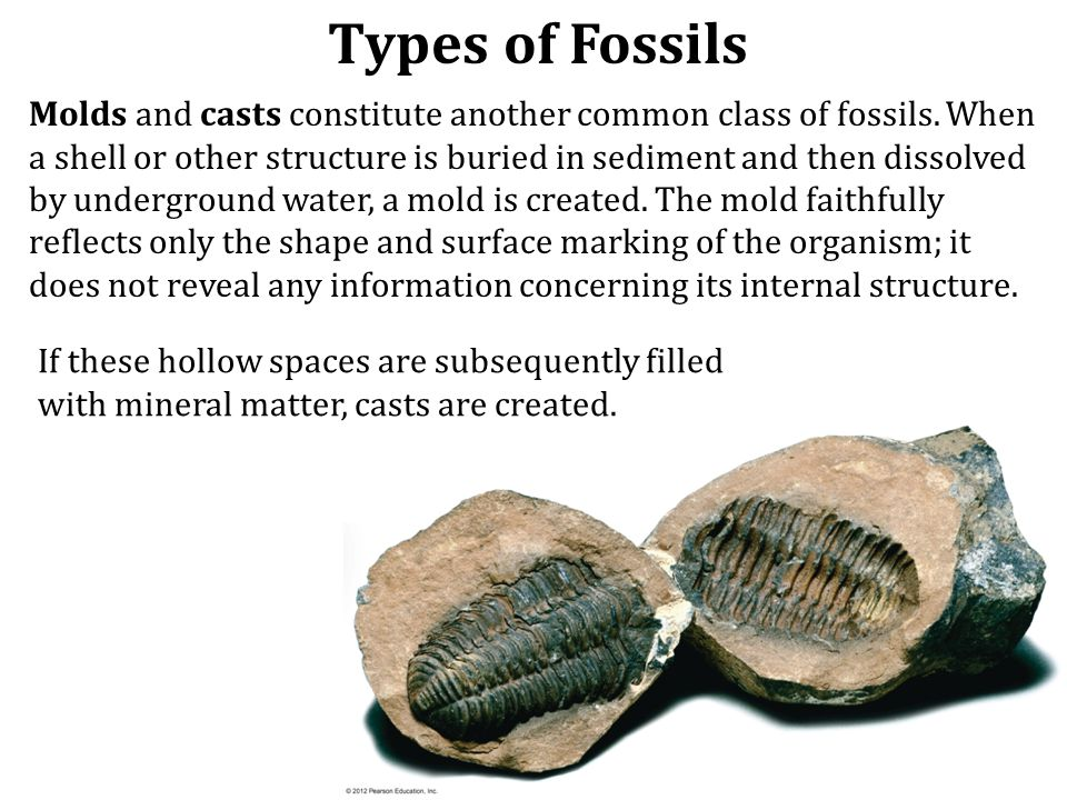 Given enough time, the remains of an organism are likely to be modified. Often fossils become petrified (literally, turned into stone), meaning that t