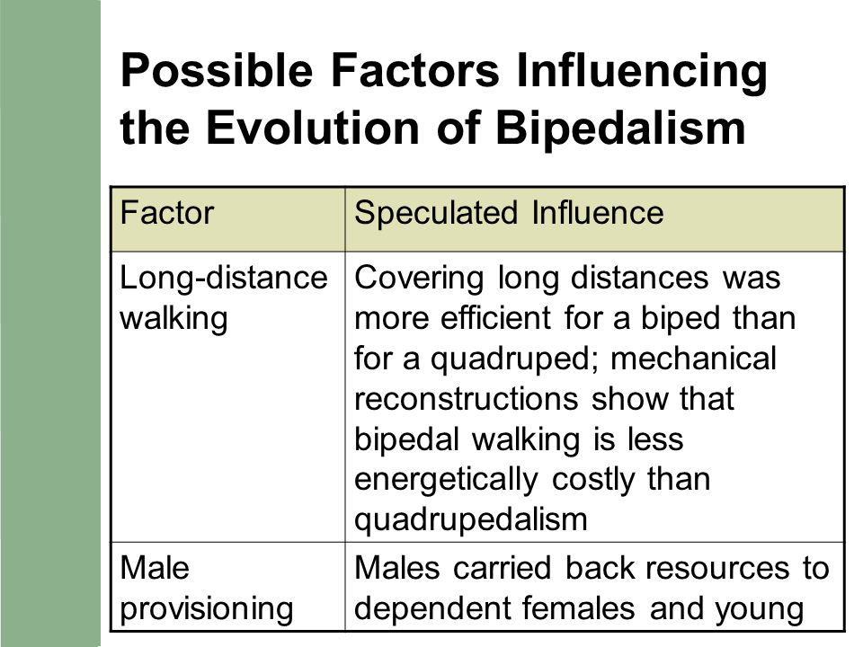 Possible Factors Influencing the Evolution of Bipedalism FactorSpeculated Influence Long-distance walking Covering long distances was more efficient f