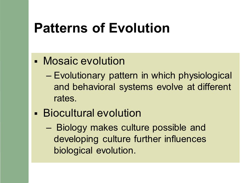 Patterns of Evolution Mosaic evolution –Evolutionary pattern in which physiological and behavioral systems evolve at different rates. Biocultural evol
