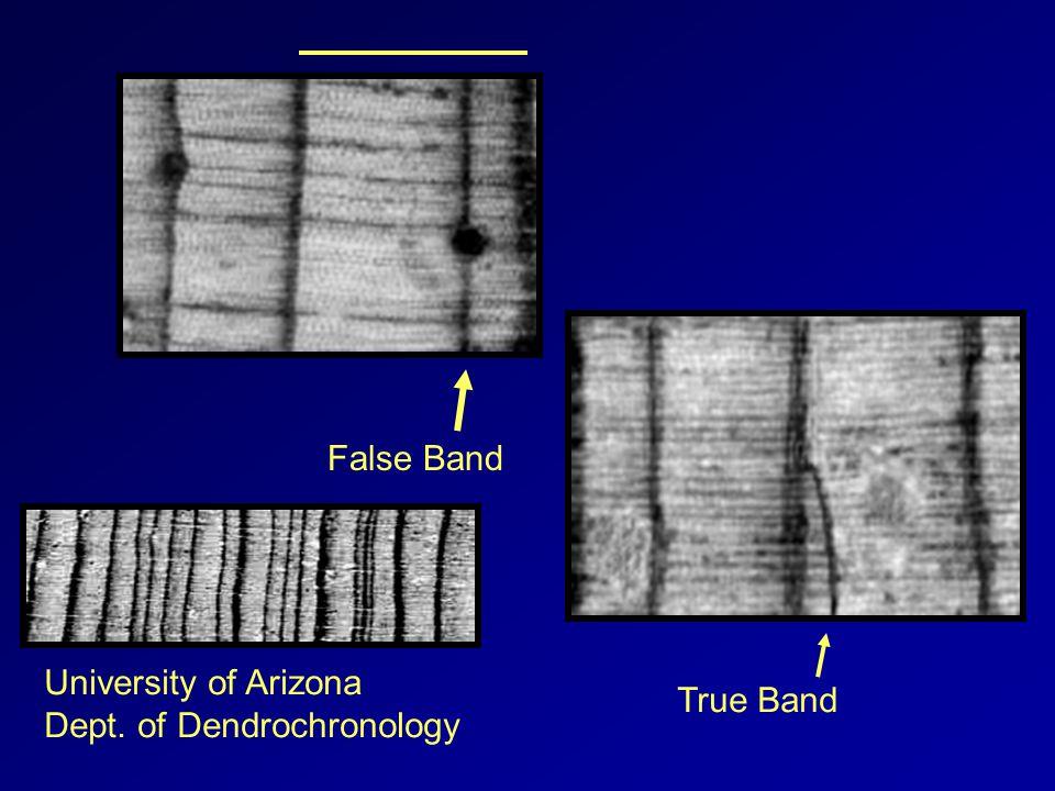False Band True Band University of Arizona Dept. of Dendrochronology