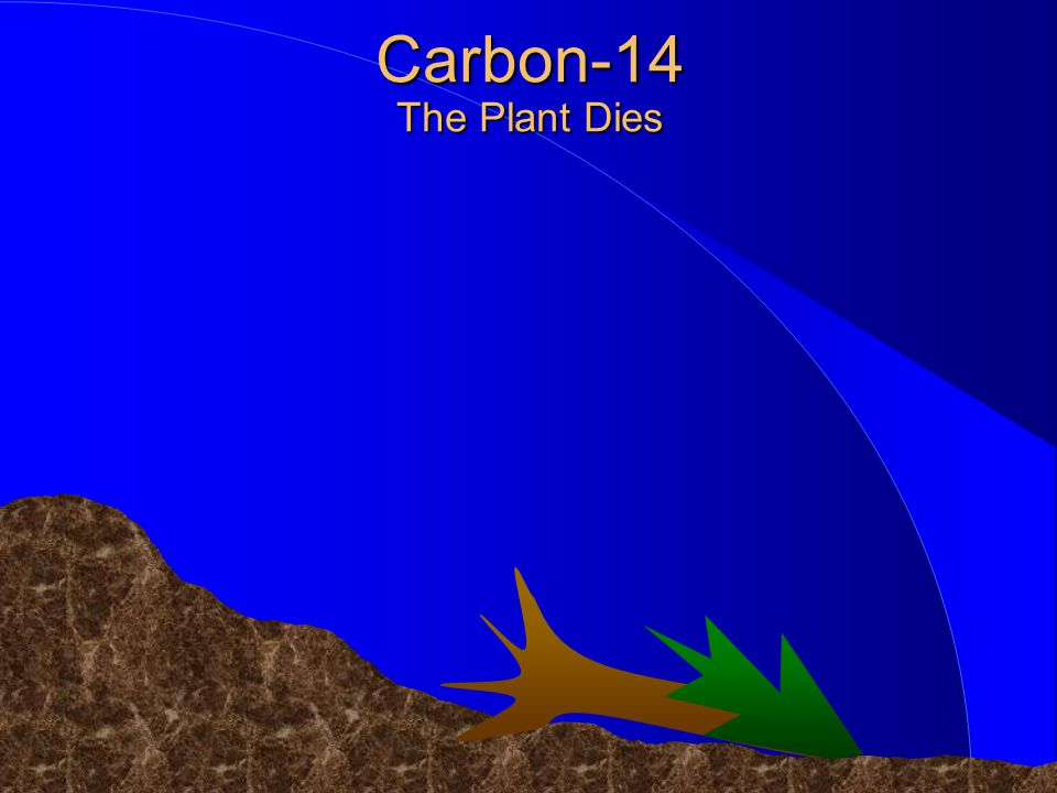 ©1998 Timothy G. Standish Carbon-14 The Plant Dies