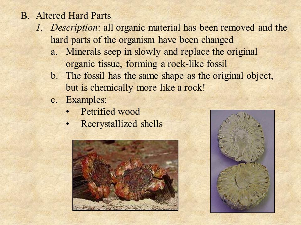 B.Altered Hard Parts 1.Description: all organic material has been removed and the hard parts of the organism have been changed a.Minerals seep in slowly and replace the original organic tissue, forming a rock-like fossil b.The fossil has the same shape as the original object, but is chemically more like a rock.