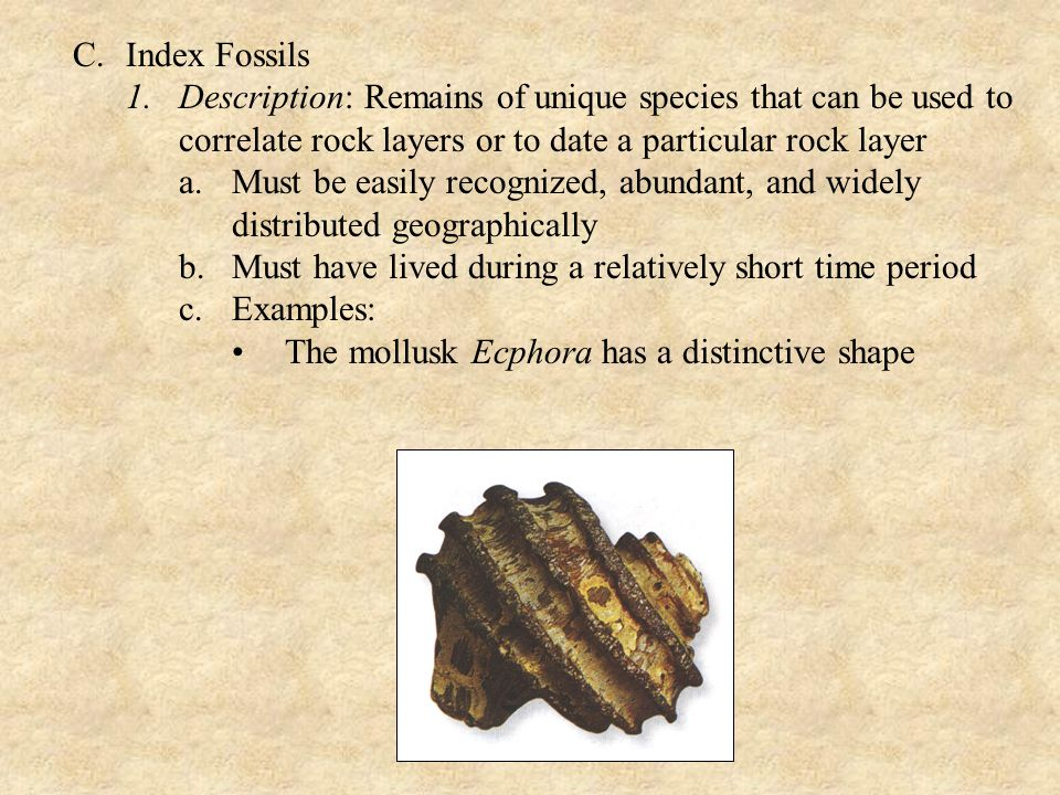 C.Index Fossils 1.Description: Remains of unique species that can be used to correlate rock layers or to date a particular rock layer a.Must be easily recognized, abundant, and widely distributed geographically b.Must have lived during a relatively short time period c.Examples: The mollusk Ecphora has a distinctive shape