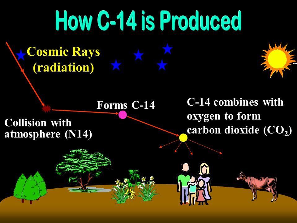 Ordinary carbon (C-12) is found in the carbon dioxide (CO 2 ) in the air, which is taken up by plants, which in turn are eaten by animals.