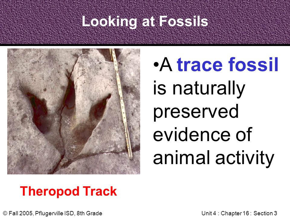 © Fall 2005, Pflugerville ISD, 8th GradeUnit 4 : Chapter 16 : Section 3 Looking at Fossils Theropod Track A trace fossil is naturally preserved eviden