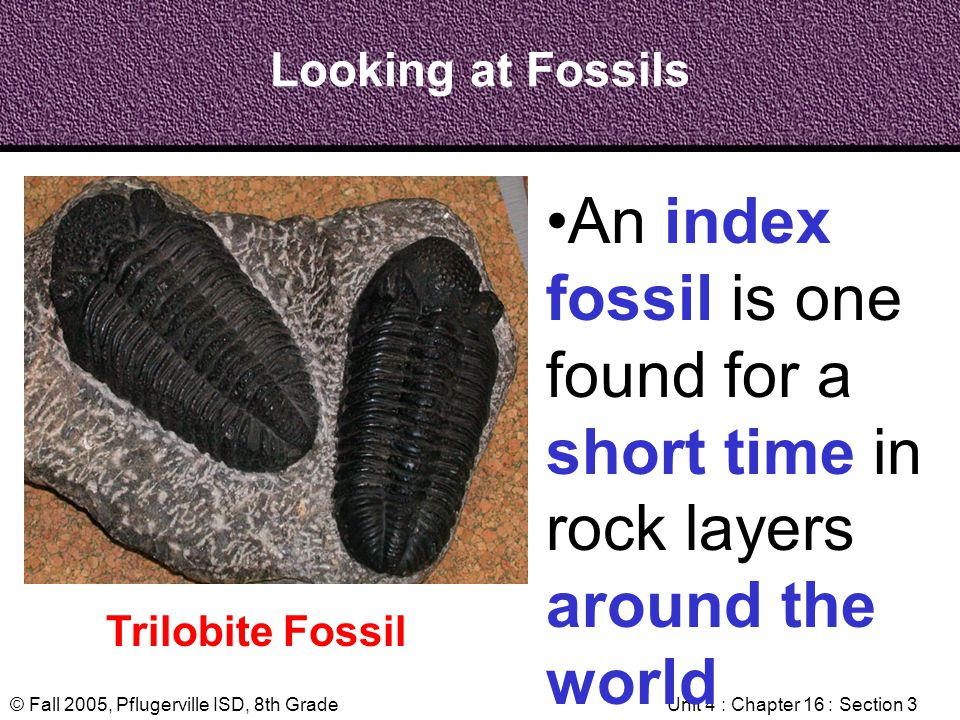 © Fall 2005, Pflugerville ISD, 8th GradeUnit 4 : Chapter 16 : Section 3 Looking at Fossils Trilobite Fossil An index fossil is one found for a short t