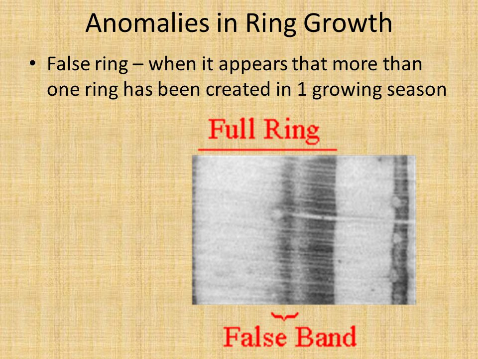 False ring – when it appears that more than one ring has been created in 1 growing season Anomalies in Ring Growth